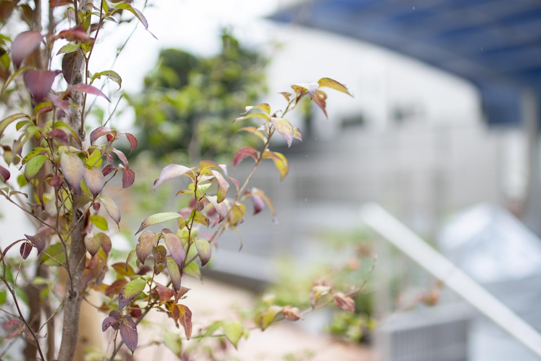 色鮮やかな植栽を施し、外観にアクセント!季節感を楽しみます♪