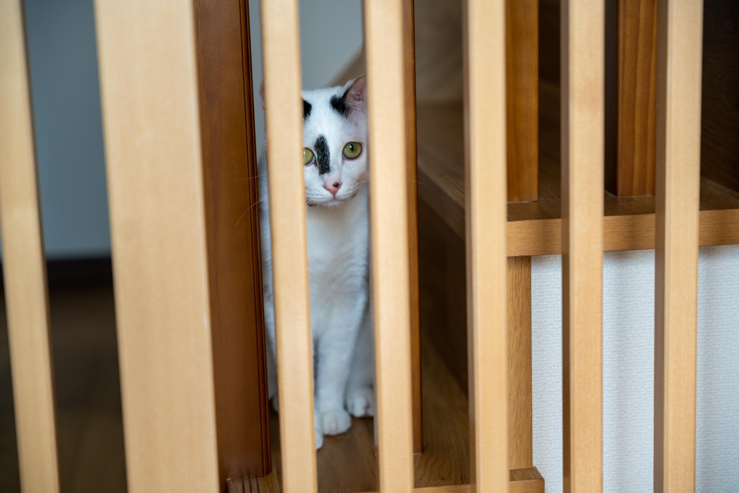 格子の隙間から愛猫のお迎え姿が見られます。